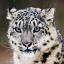 Robert Chambers Antiques Coming on line