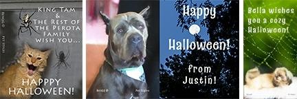 3 Halloween pet pix cards